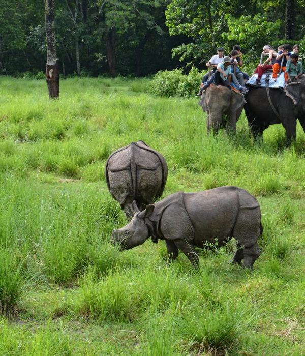 Chitwan Jungle Safari Package