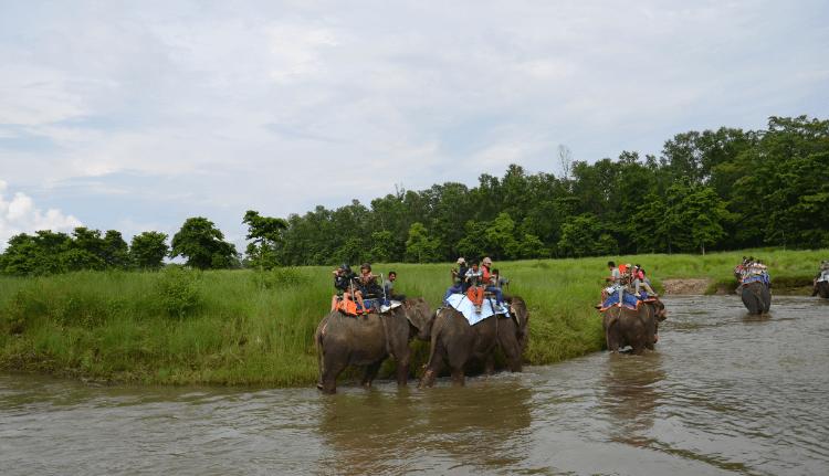 jungle safari in chitwan